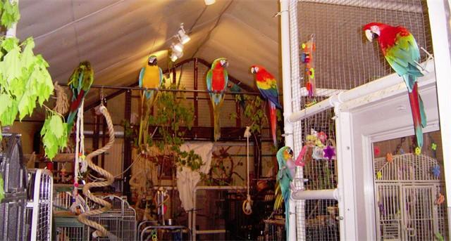 Big Bird Room scene