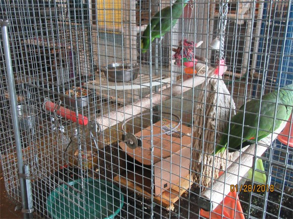 The handicapped bird cage