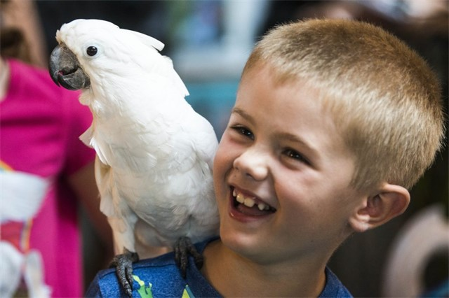 Henry McTighe, 7, of St. Albans, plays with Henrietta, a Moluccan cockatoo during an open house Saturday at the Siesta Sanctuary in Harmony. Staff photo by Michael G. Seamans